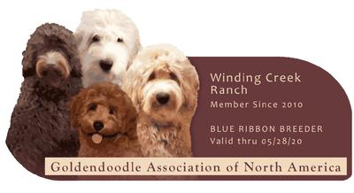 Quality Mini And Medium Goldendoodles In Indiana